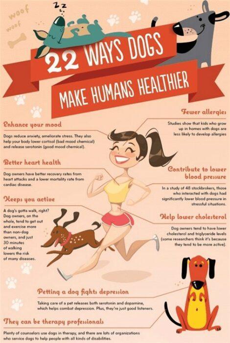 И в этом инфографика Перина под названием 22 причины, почему собаки делают людей здоровее попала в точку