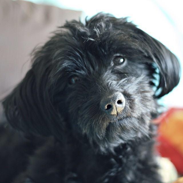 За несколько месяцев до создания блога Перин взял из приюта маленького милого черного щенка, которого он назвал Чюи (Chewie)